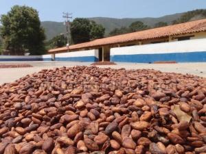 Cacao - Chuao